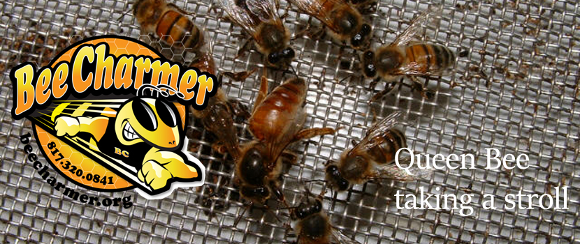 The bee charmer live bee removal in fort worth texas solutioingenieria Gallery